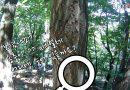 [영상/관악산]관악산 자연의 선물 송충이??? 송충이 아니죠 매미 나방 유충.. 조심하세요! 만지면 따가워요.