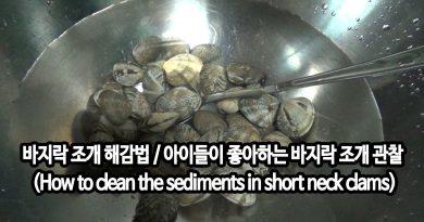 [영상/Howto/세상의모든지식] 바지락 해감법 / 클래식과 아이들이 좋아하는 바지락 관찰 – (How to clean the sediments in short neck clams)