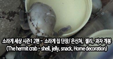 [영상/키워보니]소라게 세상 시즌1 2편- 소라게 집 단장/코코넛은신처, 소라게 젤리, 소라게 과자 개봉(The hermit crab, Coconut shell, Hermit crabs jelly, snack, Home decoration)