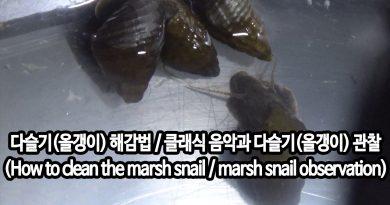 [영상/Howto/세상의모든지식] 다슬기(올갱이) 해감법 / 클래식 음악과 다슬기(올갱이) 관찰 – (How to clean the marsh snail / marsh snail observation)